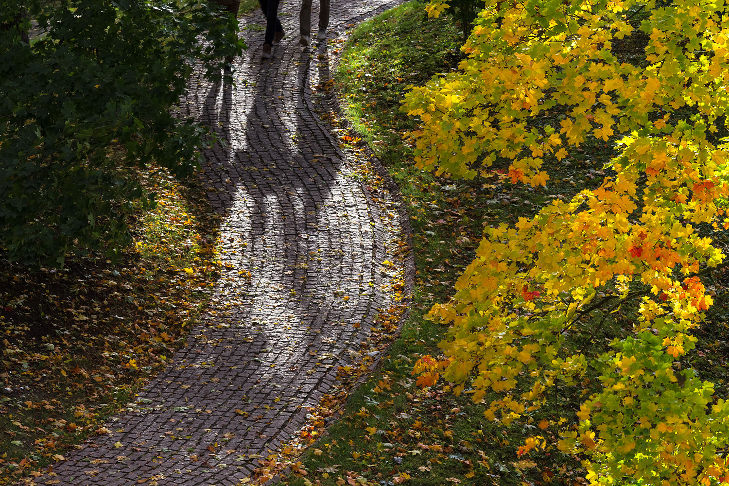 October Foliage and Shadows of Three Persons  Approaching on a Cobblestone Path